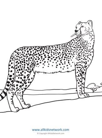 🎨 Of A Cheetah Animal - Kizi Free 2020 Printable Coloring Pages ... | 440x327