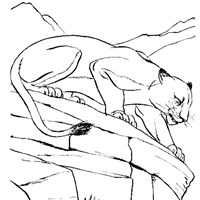 cougar coloring page