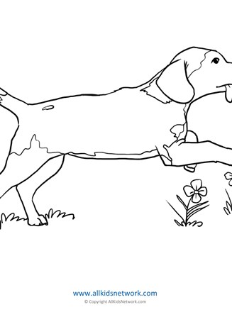 Dog Coloring Page All Kids Network