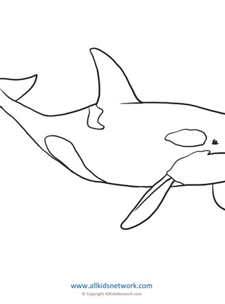 Orca Coloring Page All Kids Network