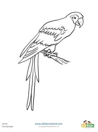 Parrot Coloring Page All Kids Network