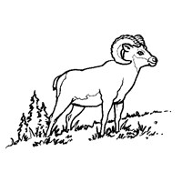 sheep horn coloring page