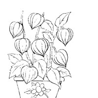 color tulips coloring page