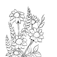 coloring flowers coloring page