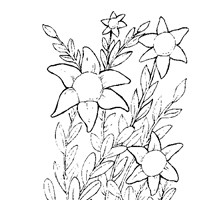 flower to color coloring page