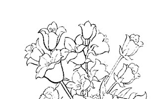flowers for coloring coloring page