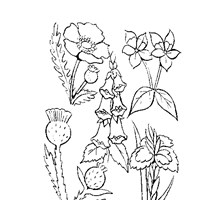 flowers variety coloring page
