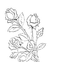 roses coloring page coloring page