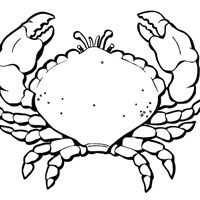 summer crab coloring page