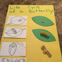 Pasta Life Cycle of a Butterfly Craft