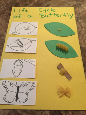 buttefly life cycle craft