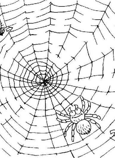 Medium Maze Spiderweb