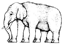 Elephant Illusion - Kids Optical Illusions