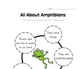 All About Amphibians Worksheet