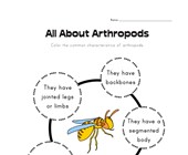 All About Arthropods Worksheet