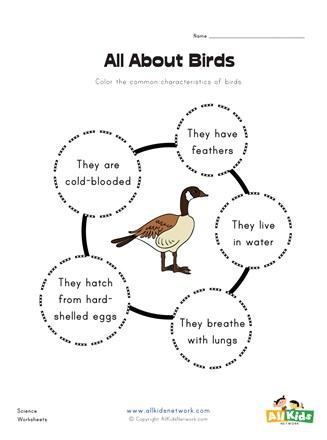 All About Birds Worksheet | All Kids Network