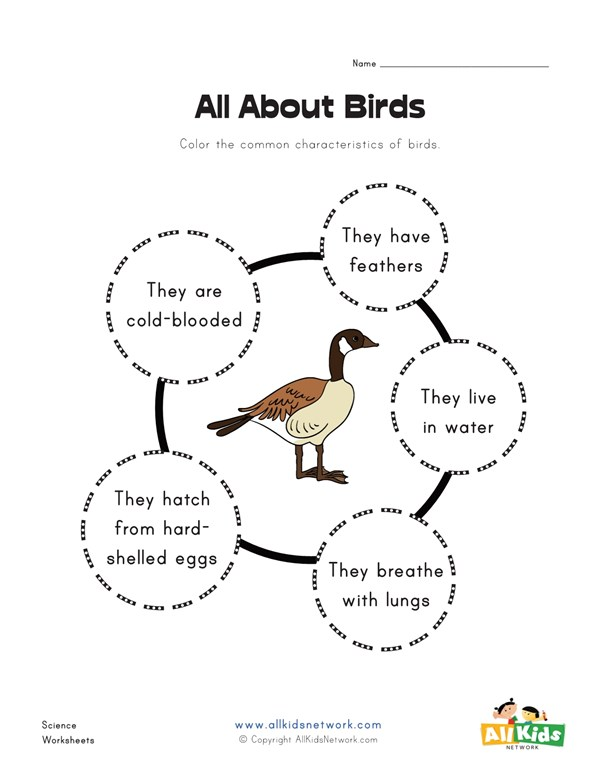 All About Birds Worksheet All Kids Network