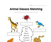 Animal Class Matching Worksheet