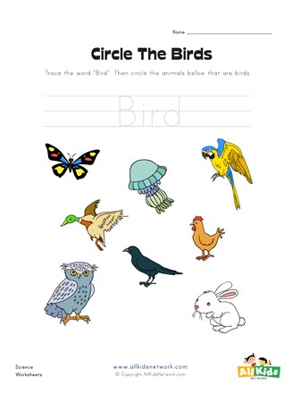 Circle the Birds Worksheet | All Kids Network