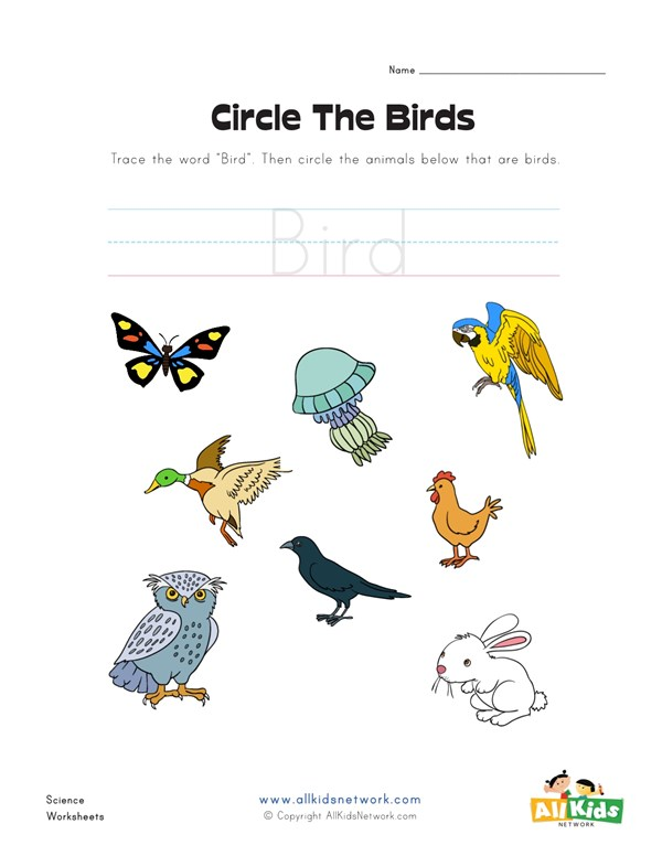 Circle The Birds Worksheet All Kids Network