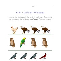 different birds worksheet