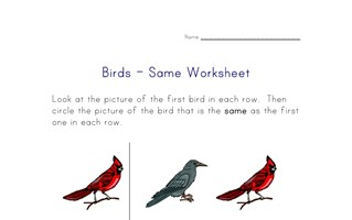 same birds worksheet