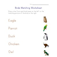 matching birds worksheet