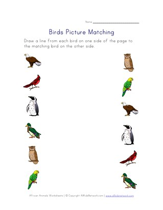 picture matching birds worksheet