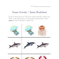 same ocean animals