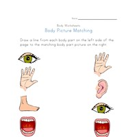 body picture matching worksheet