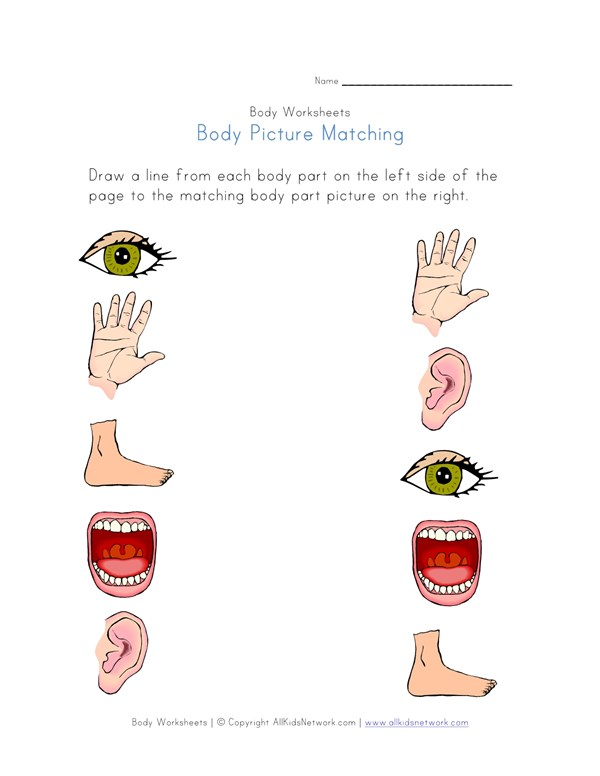 Body Part Picture Matching Worksheet All Kids Network