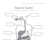 Label the Digestive System - Cut and Paste