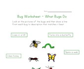 about bugs worksheet