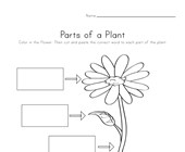 Parts of a Plant Cut and Paste