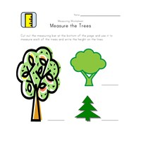 measuring worksheet trees