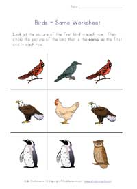birds same worksheet