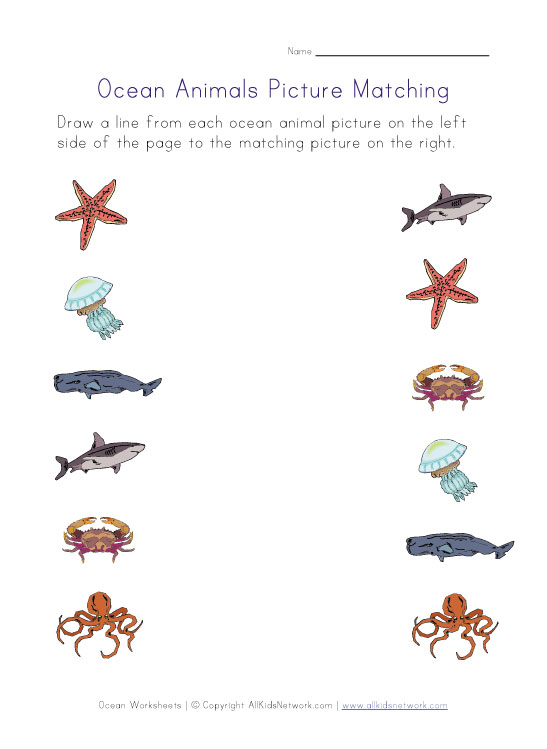 ocean animals pictures