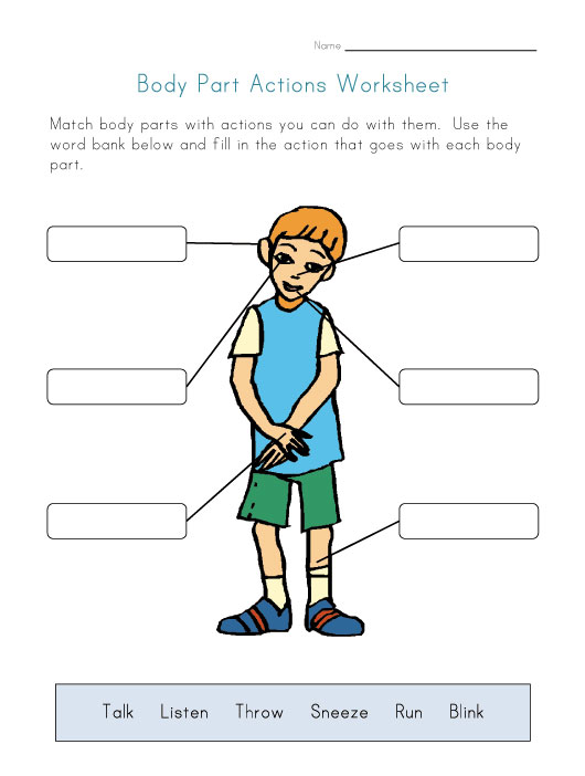 kids body worksheet