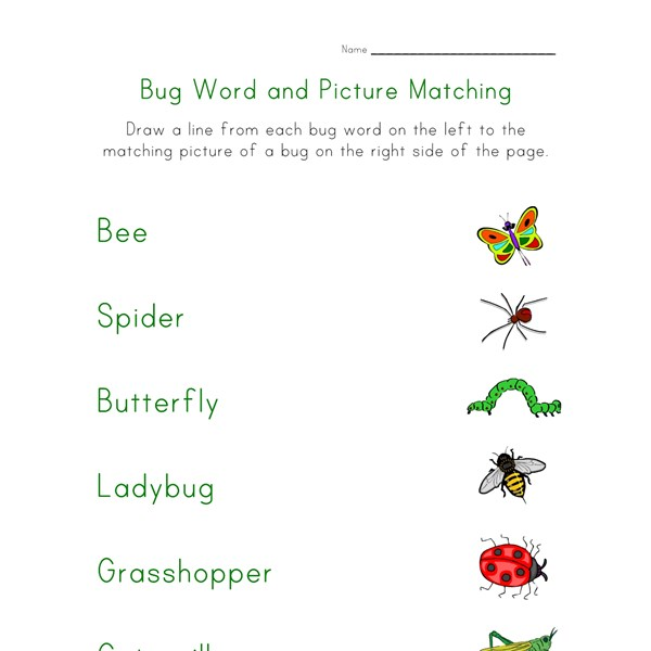 Bugs Matching Worksheet All Kids Network