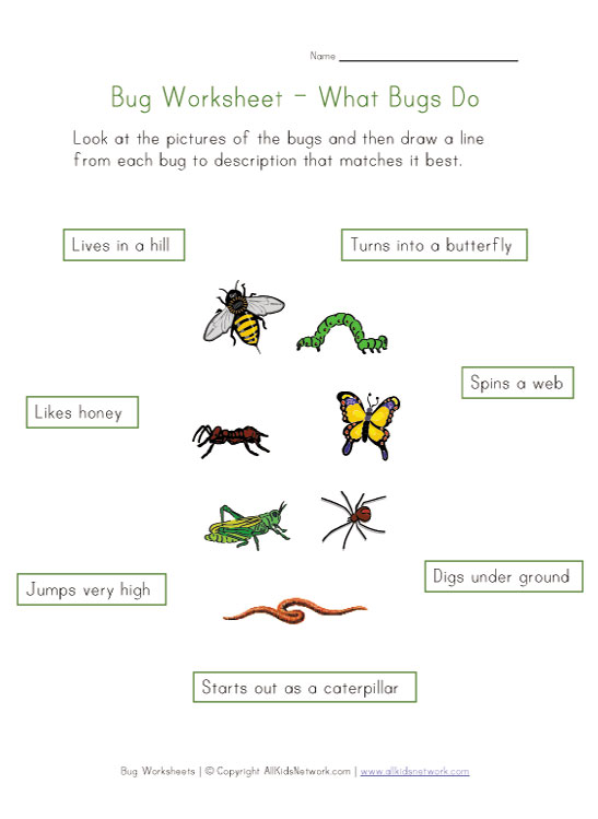 View and Print Your About Bugs Worksheet