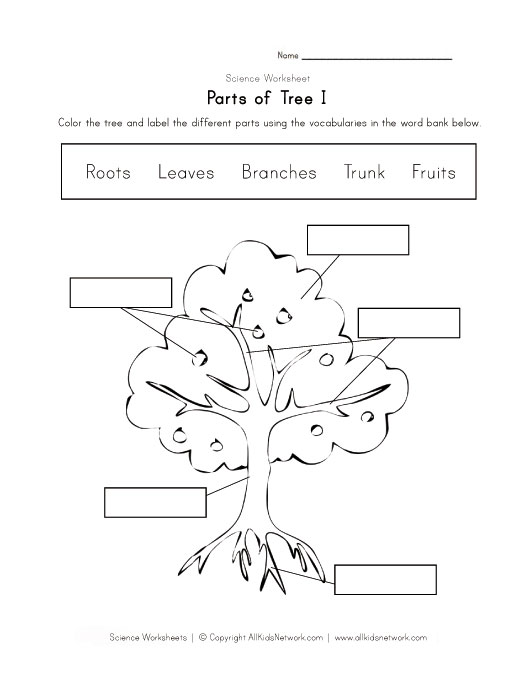 View and Print Your Tree Worksheet